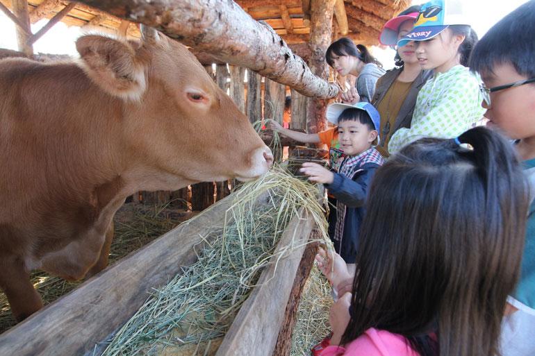 横城韓牛祭り