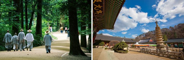 (左)月精寺の名物のもみの道。 (右)月精寺全景。寺院と周辺の山は1枚の東洋画を連想させる。