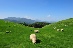 大-嶺牧場