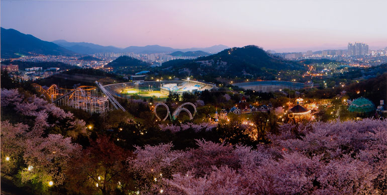 大邱Eワールド星の光桜祭り