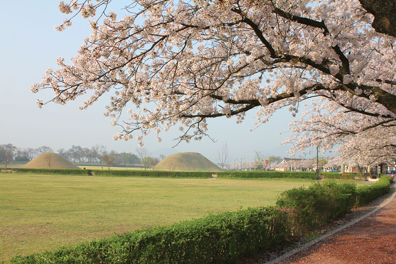 慶州桜祭り
