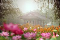 부여연꽃축제