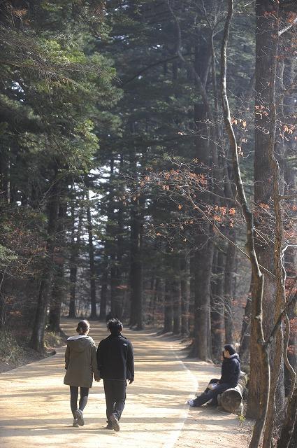 서브03_월정사(전나무숲)